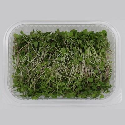 Microgreens Radish (Box) - Agreen Organics
