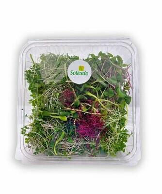 Microgreens Salad Mix (Box) - Soleado