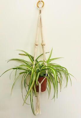 Macrame Hanger Plant Cotton (Piece) - Spot the Knot
