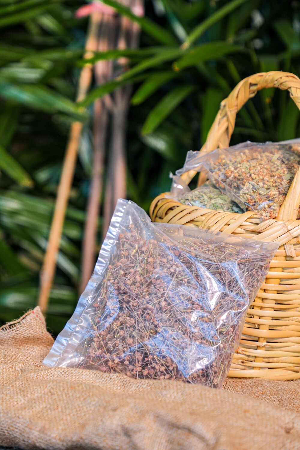 Micromeria (Micromeria myrtifolia) (Bag) - Nature by Marc Beyrouthy