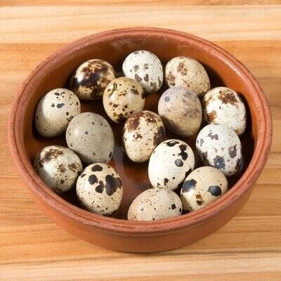Eggs Quail بيض فري (Piece) - Ain Akl