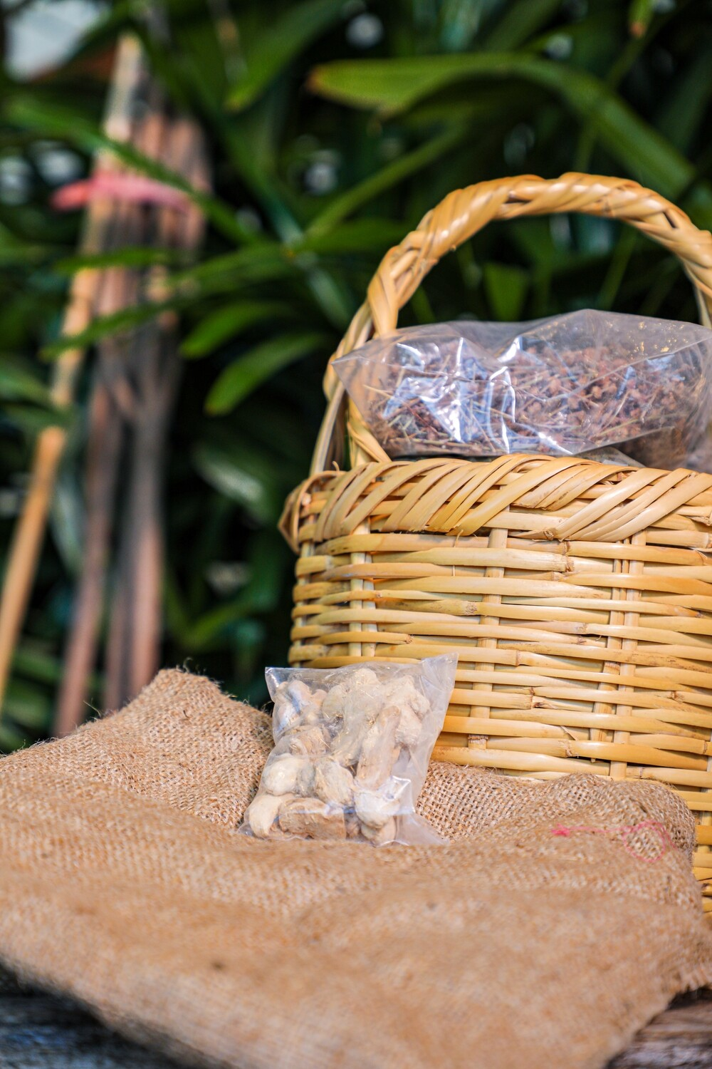 Ginger Seeds (Zingiber officinale) (Bag) - Nature by Marc Beyrouthy