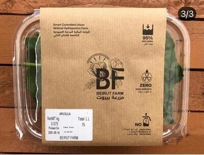 Arugula (Box) - Beirut Farm