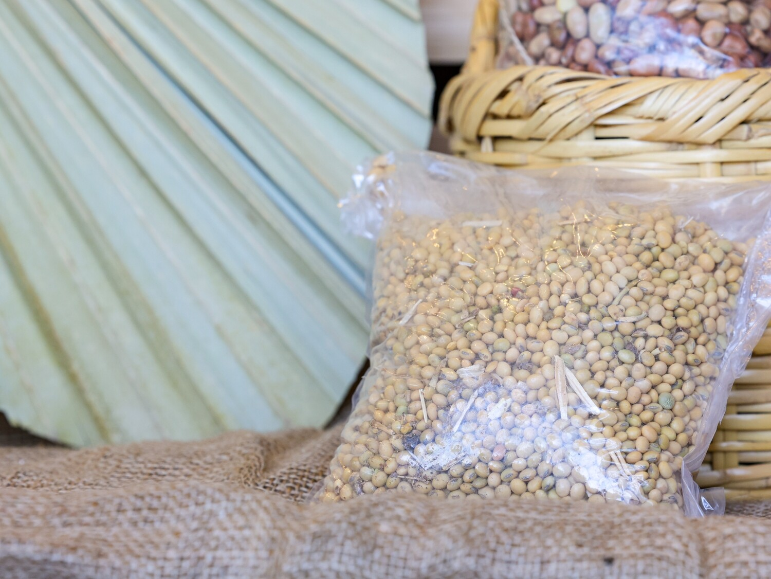 Soya Beans (Bag) - Nature by Marc Beyrouthy