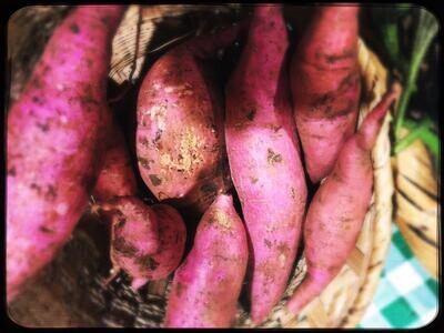 Potato Sweet (Kg) - Bassatin Baanoub