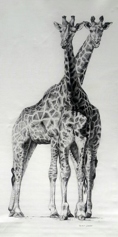 Two Giraffe Friends