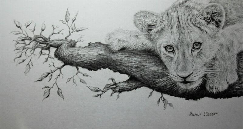 Lion cub - Stalking