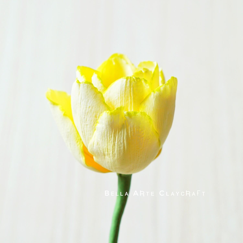 Round Tulip