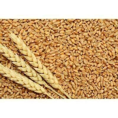 ઘઉં (Wheat) Best Quality, Clean (minimum packet 20 kg)