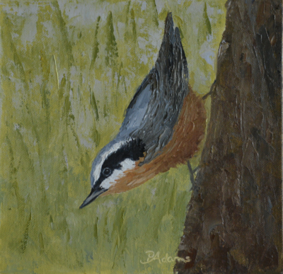 NUTHATCH IN SPRING by Pam Adams