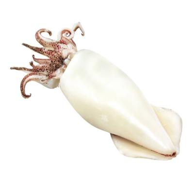 Calamar Con Tubo / Tentaculo 2.5 Lbs