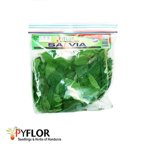Salvia Pyflor 30gr