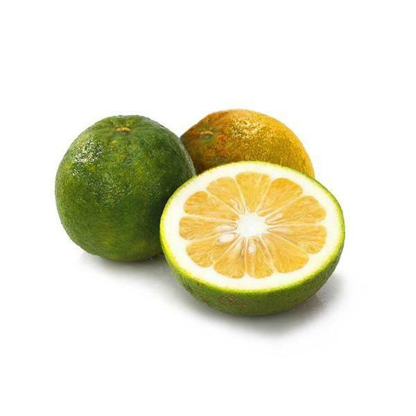 Naranja Agria - 1 unidad