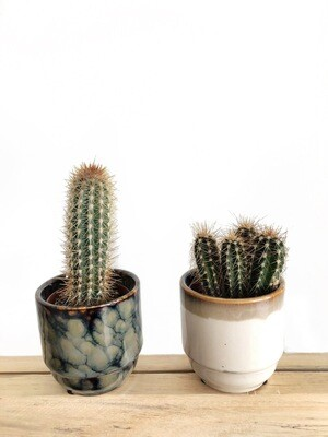 Kaktukset ruukuissa (B)