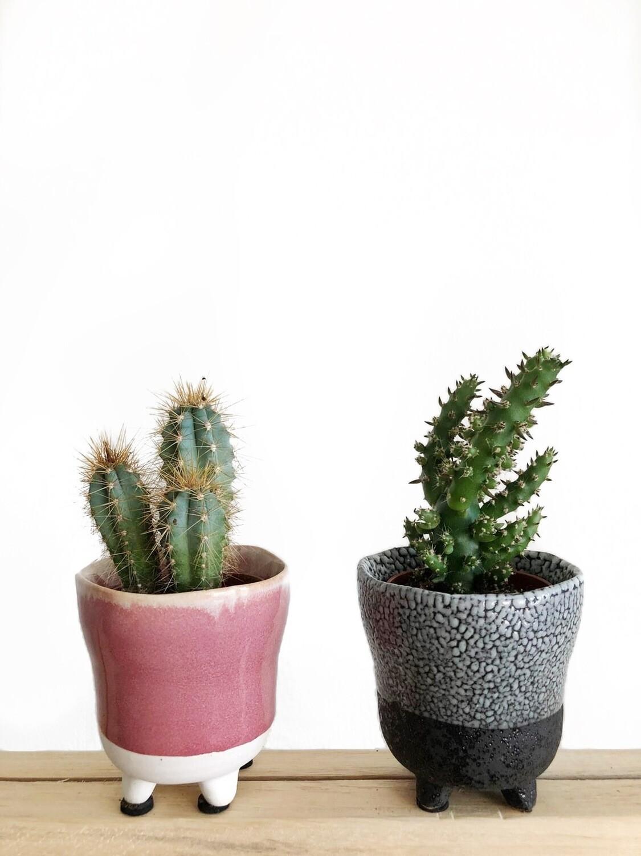 Kaktukset ruukuissa (C)