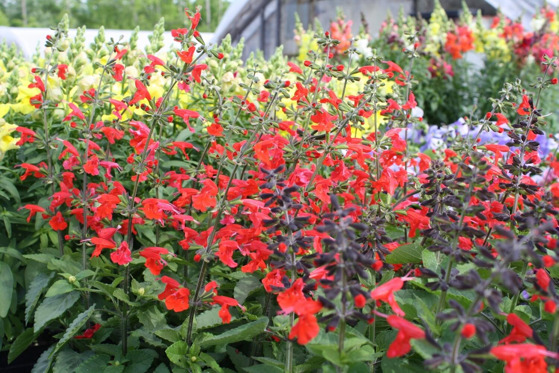 Pollinator Specialties for Butterflies, Hummingbirds & Honeybees