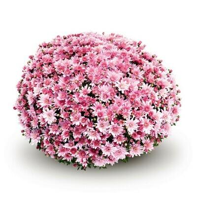 Arluno Pink table 82-84