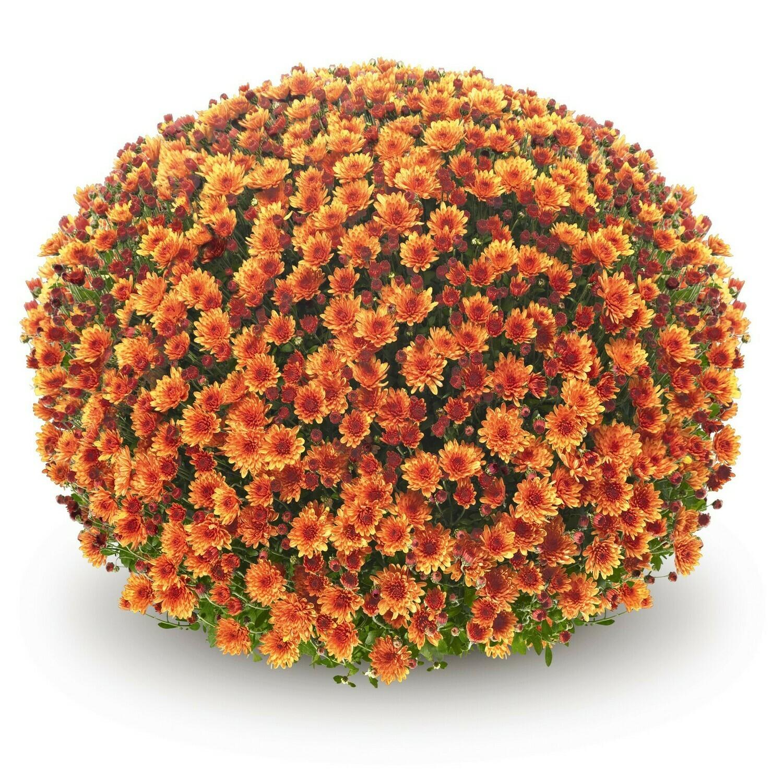 Veritas Orange FT 40-51