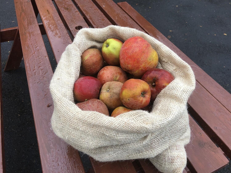 Box of 4 Organic Apples