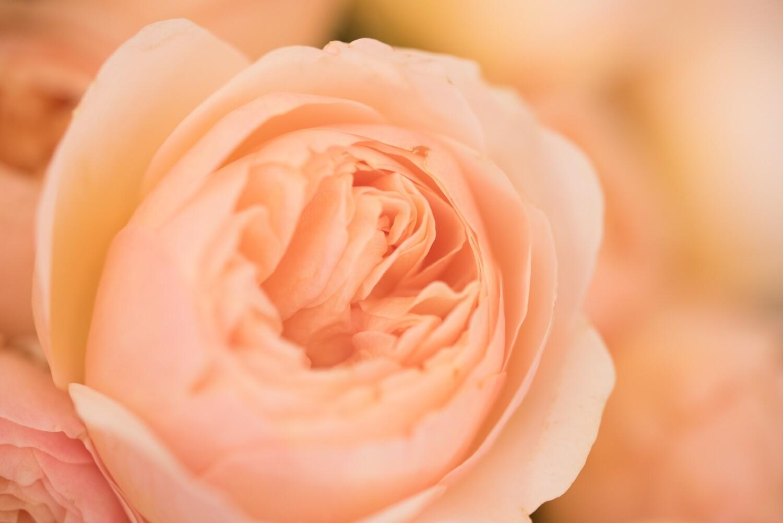 """Karte """"Rose"""" handgeschrieben mit Couvert"""
