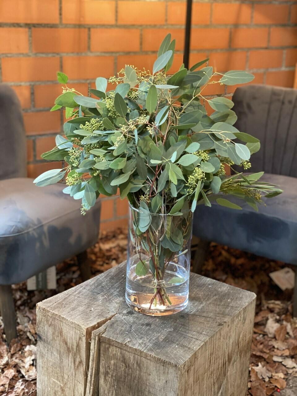 Eucalyptus Bund