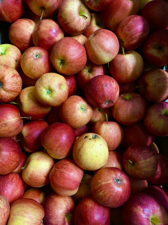 Äpfel aus eigner Obstanlage in Stäfa