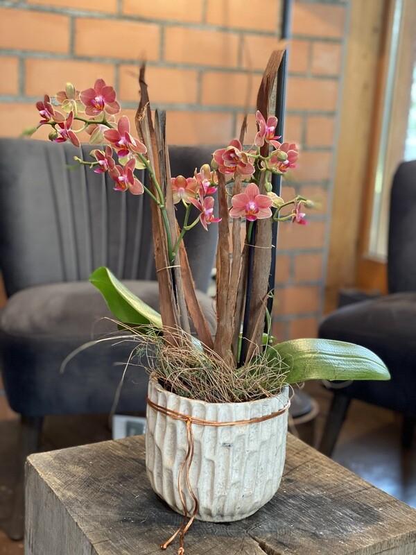 Orchidee orange