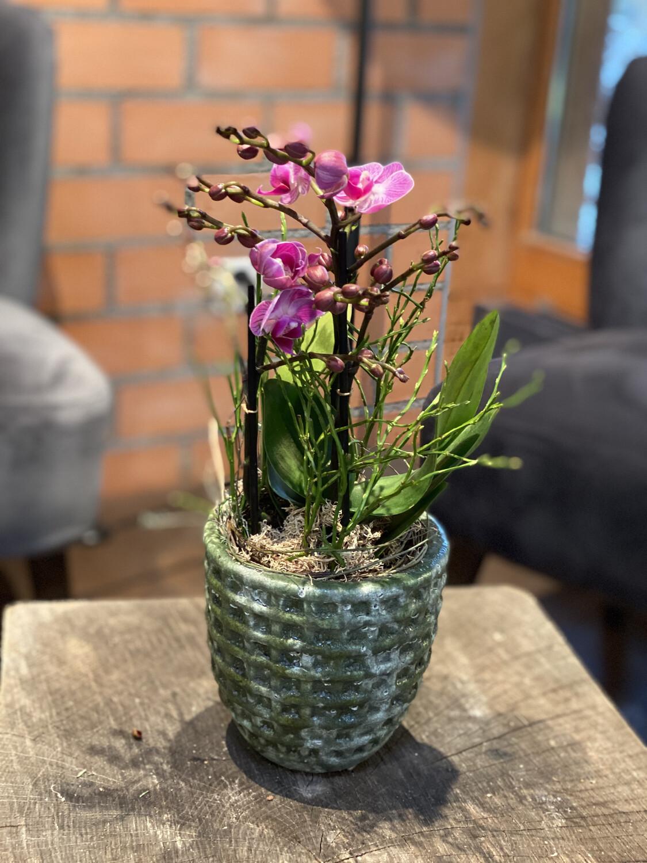 Orchidee klein in Pink