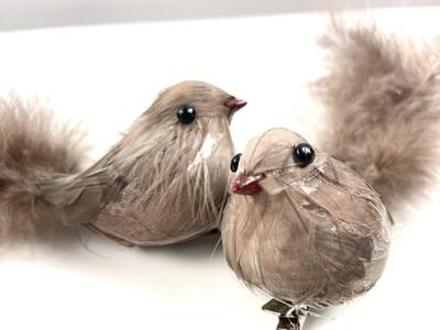 Bird Clip