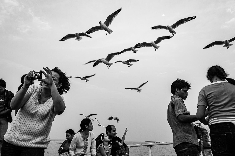 Seagulls Take A Peek