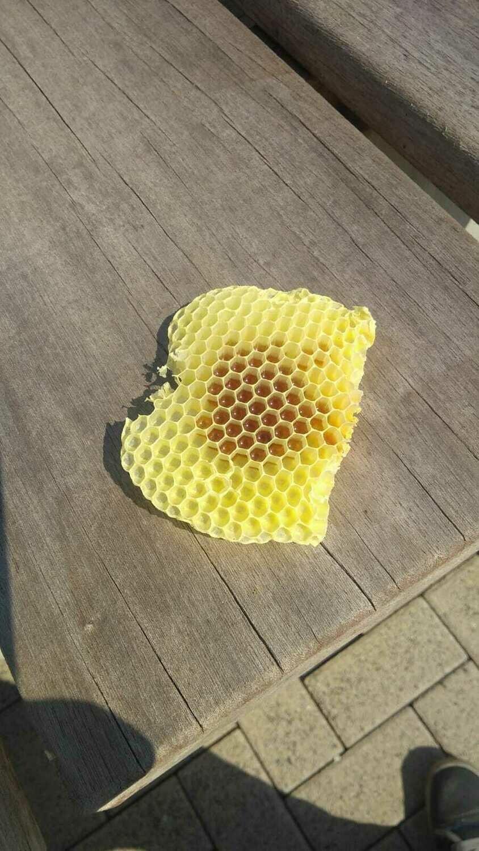 200g Bienenwachs aus Wildbau