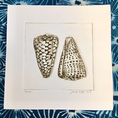 Cone Shells Drypoint Etching