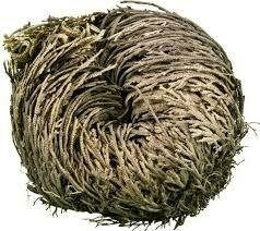 ROSE OF JERICHO (THE RESURRECTION PLANT) LARGE  WITH CRYSTAL GIFT INSIDE