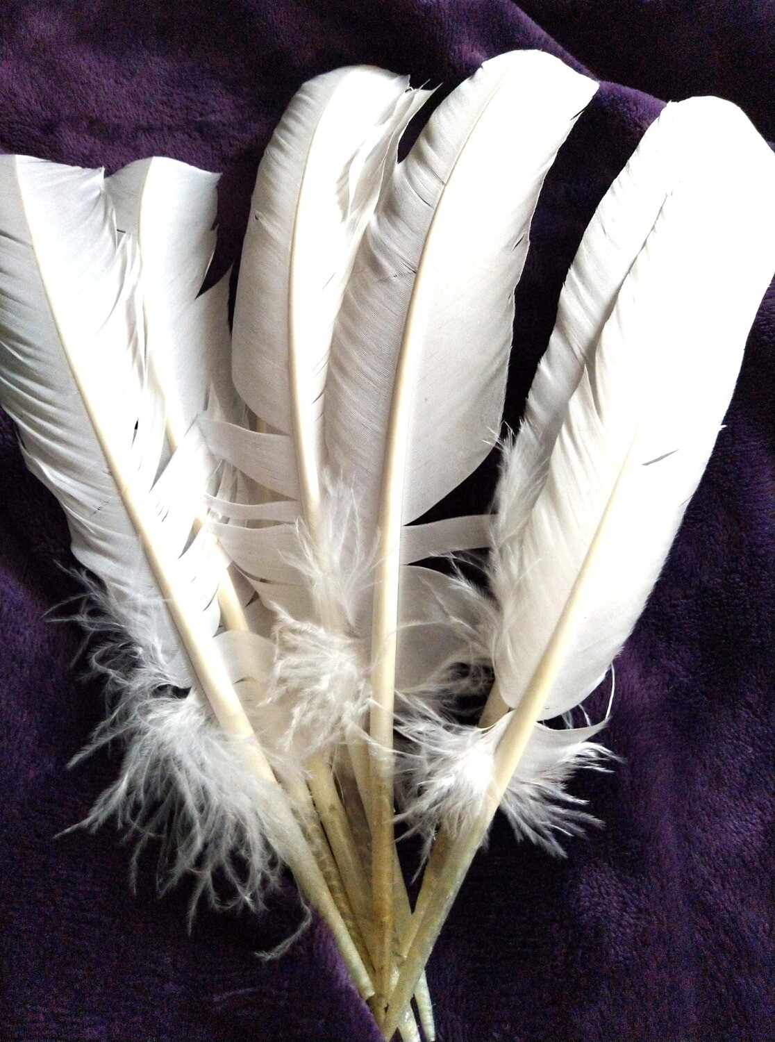 WHITE FEATHER LARGE- SMUDGING
