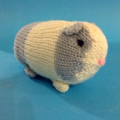Guinea pig, grey& white