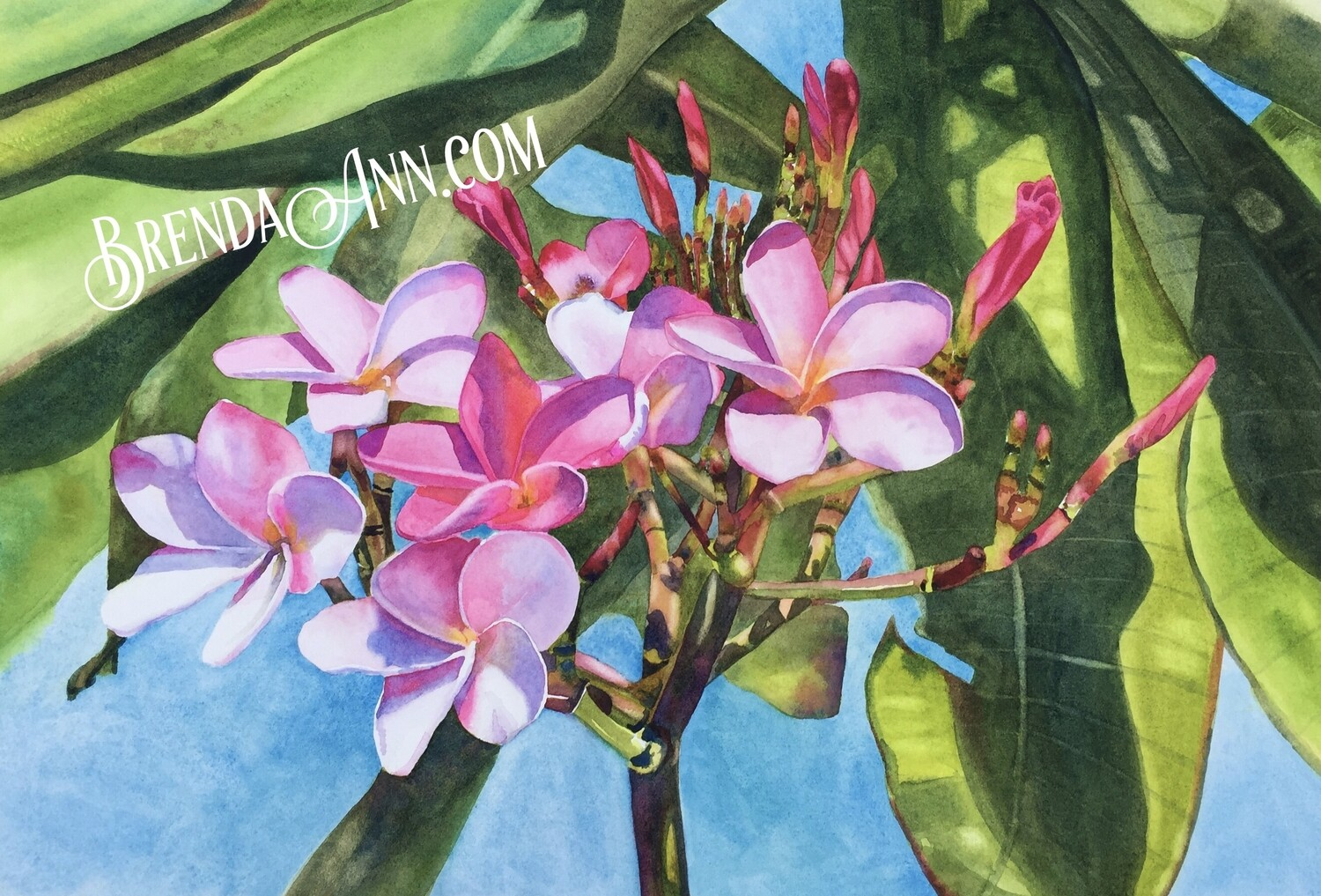 Pink Plumeria Flowers - Hand Signed Floral Archival Watercolor Print