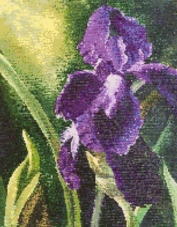 Purple Iris Cross Stitch - Pattern Only - Instant Digital Download