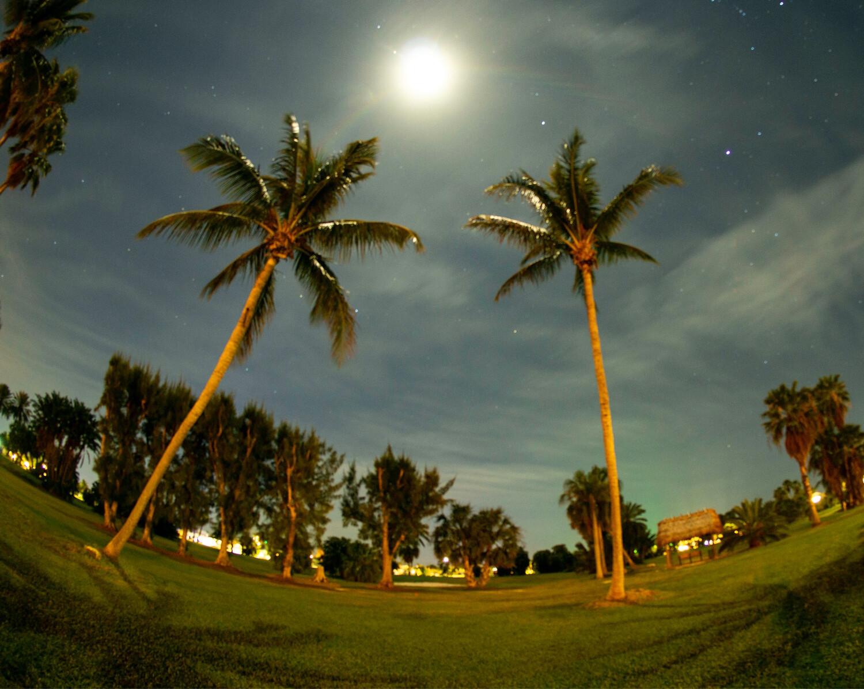Midnight Palms - Photography