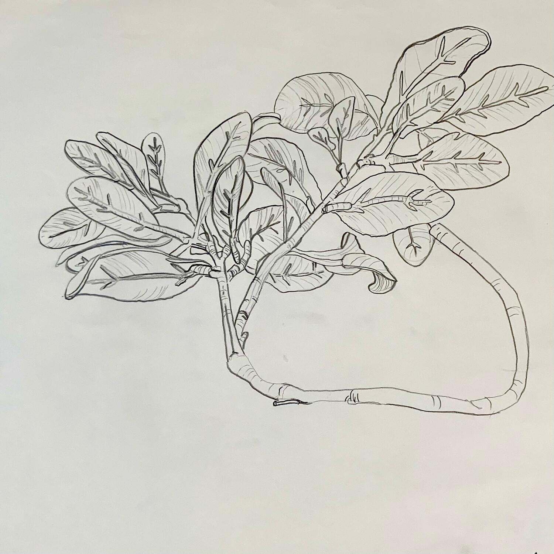 Silk Leaf Study - Contour Drawing - Graphite