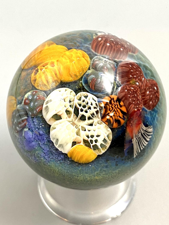 Medium Coral Reef Marble