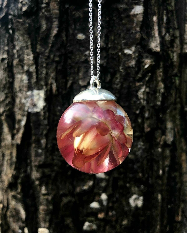 Gold and Pink Strawflower Globe