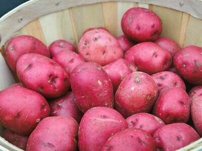1 Bunch of Potatoes