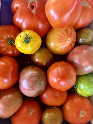 Tomate ancienne (le kg)