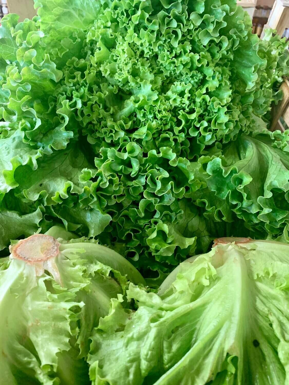 Salade (la pièce)