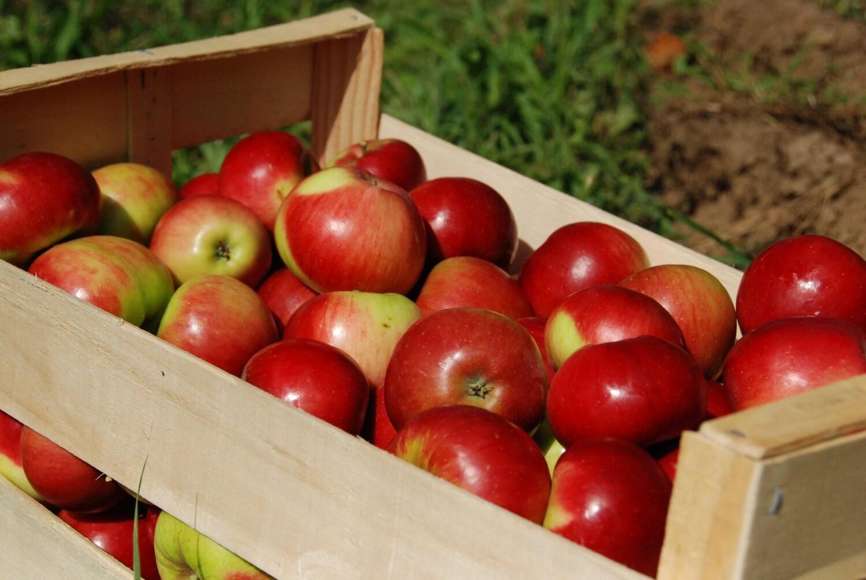 Caisse pomme Gala (14kg)