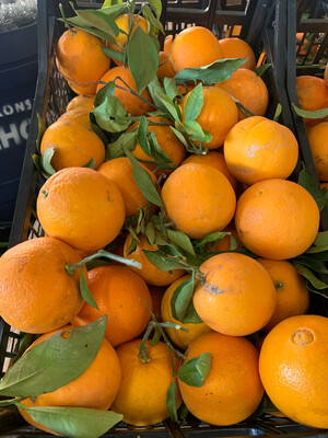 Caisse d'orange 10kg