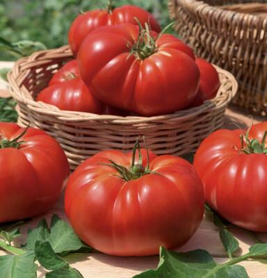 Tomate marmande (le kg)