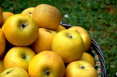 Pomme Chanteclerc (le kg)