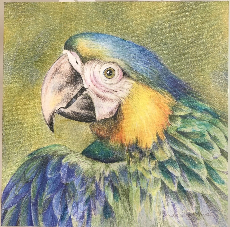 Blue Parrot by Mindy Lighthipe