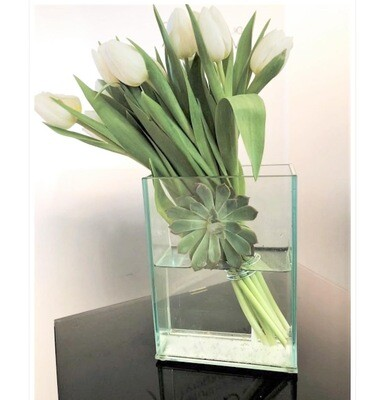 Modern Tulip
